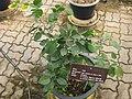 Gardenology.org-IMG 7986 qsbg11mar.jpg