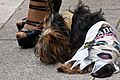 Gay Pride Parade 2010 - An Overpowering Experience For a Little Dog (4737284713).jpg