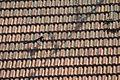 Gazza sul tetto di una casa.jpg