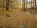 Gelb Wald - panoramio.jpg