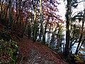 Geneve, Promenade le long du Rhone - panoramio (38).jpg