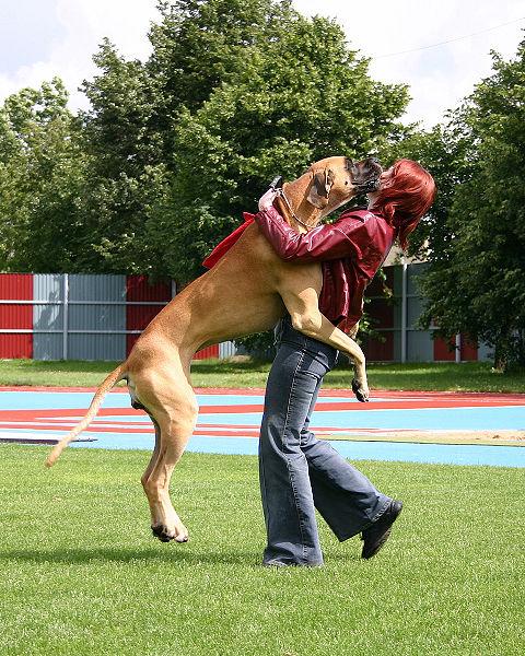 George Dog Walking Horwich