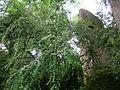 Giardino di Ninfa 35.jpg
