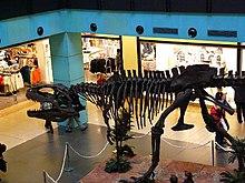 http://upload.wikimedia.org/wikipedia/commons/thumb/1/13/Gigantosaurus.jpg/220px-Gigantosaurus.jpg