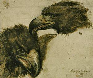 Giovanni da Udine - Image: Giovanni da Udine Études tête d'aigle