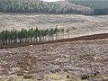Glen Taitney - geograph.org.uk - 363118.jpg