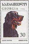 Gordon-Setter-Canis-lupus-familiaris.jpg