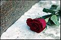 Gothic-Rose-0001.jpg
