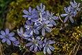Gradina Botanica (8703502424).jpg