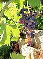 Grapes (14953845831).jpg
