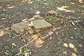 Grave - Dutch Cemetery - Chinsurah - Hooghly 2017-05-14 8419.JPG