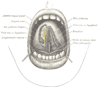 Frenulum of tongue