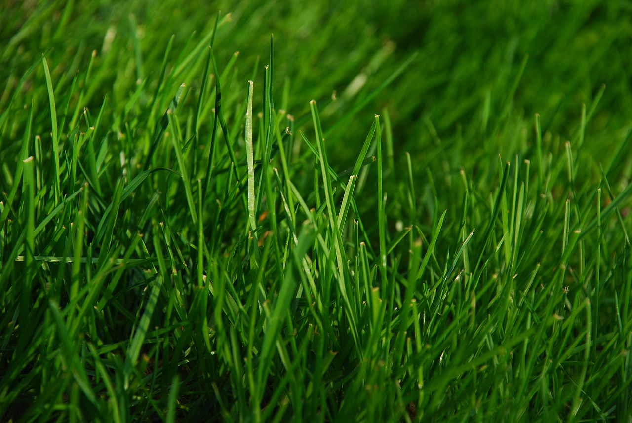 File:Green Grass.JPG