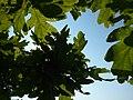 Green sky - panoramio.jpg