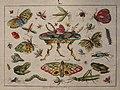 Gregor (Řehoř) Balzer - Studie hmyzu a dvou žab.jpg