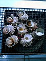 Grilled Turban Shells 001.jpg