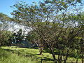 Guiguinto,Bulacanjf599.JPG