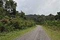 Guyane route de Kaw D 6.jpg