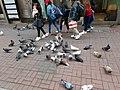 HK 中環 Central 德輔道中 39 Des Voeux Road Central 德忌利士街 Douglas Street freedom pigeons December 2019 SS2 02.jpg