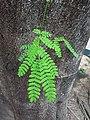 HK CWB 銅鑼灣 Causeway Bay 摩頓台 Moreton Terrace tree green leaves June 2019 SSG 02.jpg