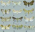 Habitus of Schacontia adults - ZooKeys-291-027-g001.jpeg