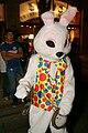 Halloween 2010 Austin Rabbit.jpg