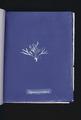 Halymenia furcellaria (NYPL b11861683-419733).tiff
