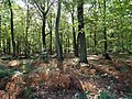 Hambach forest 28.jpg