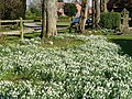 Hannington Churchyard - geograph.org.uk - 697916.jpg