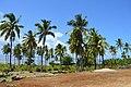 Hatsinzi Comores1.jpg