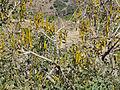 Hauts plateaux au nord de Sekota (8).jpg