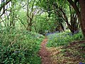 Heart Of England Way in Dumble Wood - geograph.org.uk - 451214.jpg