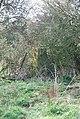 Hidden Trig Point on Croucheston Down - geograph.org.uk - 359783.jpg