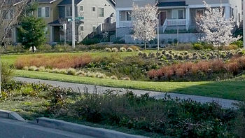 English: Large bioswayle (raingarden) integrat...