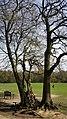 Highgate Wood 20170330 145602 (49401084837).jpg