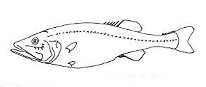 Hispidoberyx ambagiosus.jpg
