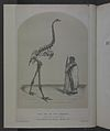 History of the birds of NZ 1st ed-frontispiece.jpg