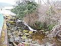Hoadley Creek, AK.JPG