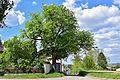 Hollabrunn - Kammersdorf - ND HL-052 - Linde.jpg