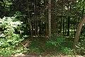 Hollenegg Gelände der Altburg.jpg