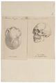 Homo sapiens - Mongolië - 1700-1880 - Print - Iconographia Zoologica - Special Collections University of Amsterdam - UBA01 IZ19400256.tif