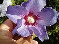 Honfleur 2008 PD 65.JPG
