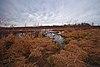 Hook Lake Bog.jpg