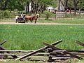 Horse Power P5100018.jpg