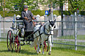 Horse driving at Stiegl 2011 15.jpg