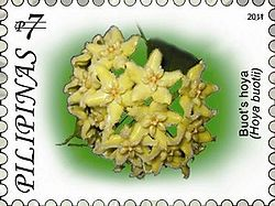 Hoya buotii 2011 stamp of the Philippines.jpg