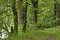 Hráz rybníku Dolní u Lišova.jpg