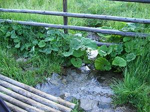 Telgárt - Hron near Telgárt