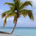 Hugo Tree at Blue Waters in Antigua.jpg