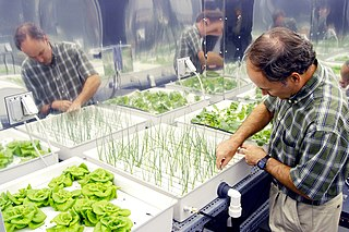 Hydroponics growing plants without soil using nutrients in water